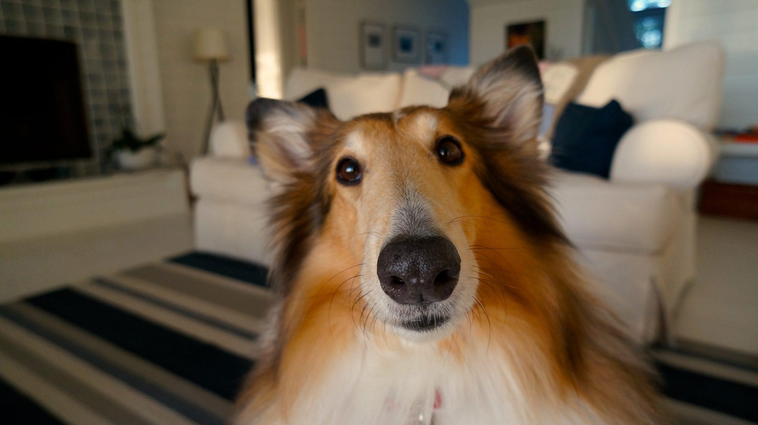 human canine bond