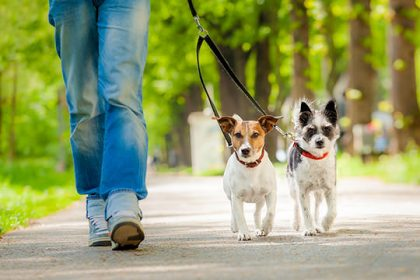 5 Things That Should NOT Happen in Dog Boarding