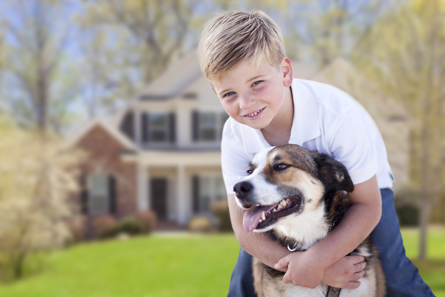 Your Special Needs Dog and Minding | Dog Minding Sydney