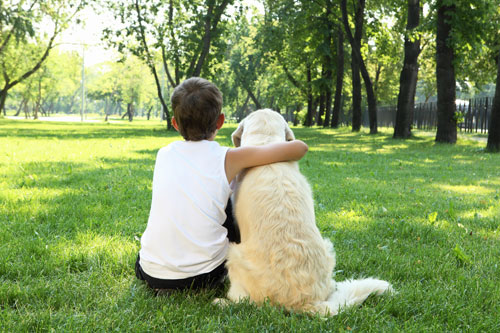 Kennelling vs. Dog Minding: The Pros and Cons |Dog Minding Adelaide