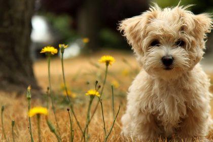 Don't Fret Pet! 101's: Doggie Diet