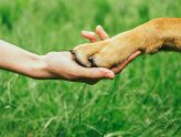 Why Dog Minding Works | Dog Minding Gold Coast