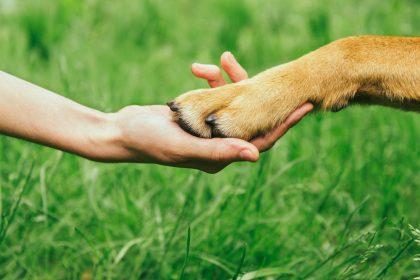 Why Dog Minding Works   Dog Minding Gold Coast