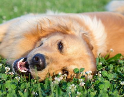 How to Prepare Your Dog for Boarding | Dog Boarding Adelaide