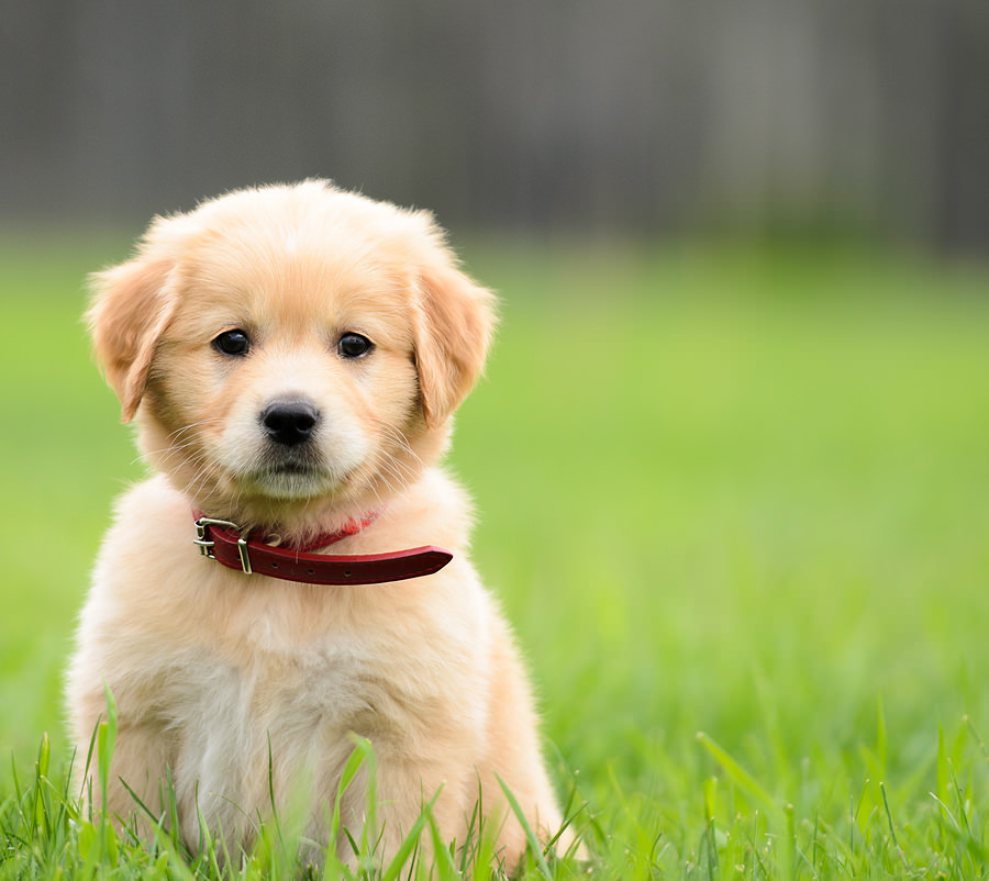 Don't Fret Pet! 101's | How to Greet a New Pup