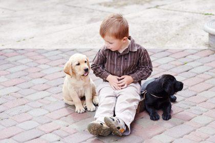 Doggie Playtime