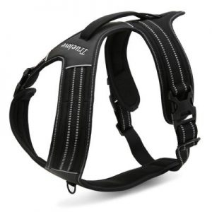 harness for running with your dog