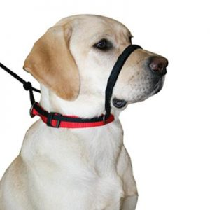head halter for running with your dog
