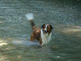 dog's tail wag