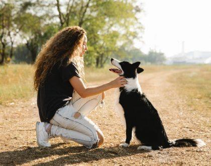 body language of dogs
