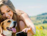 Finding Good Dog Minding on the Gold Coast